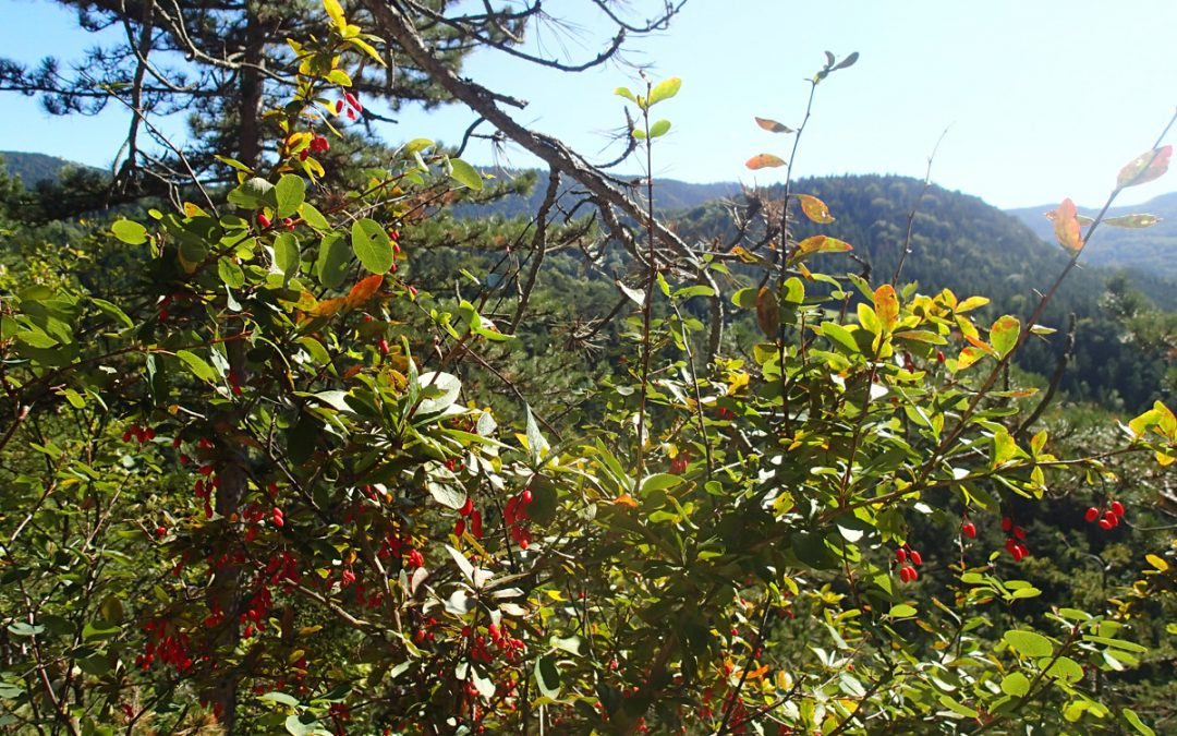 Herbstwandertag 2017 in die Gauermannheimat