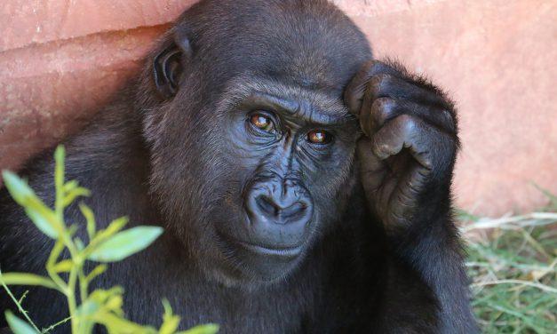 Evolution ist falsch?
