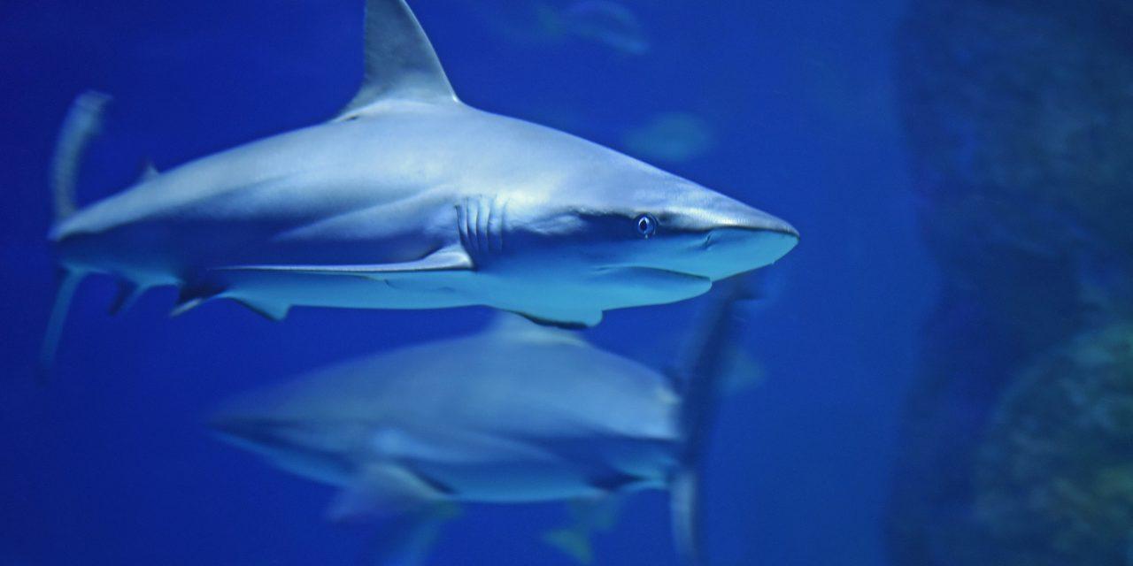 Haus des Meeres: Anmeldungen abgeschlossen